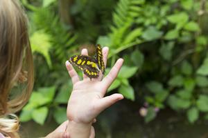 Kind und Schmetterling